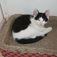 Adopt A Pet :: Mr Bibb - Lacon, IL