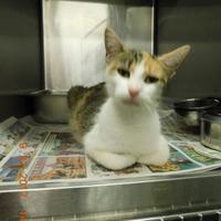 Adopt A Pet :: Musha - Owensboro, KY