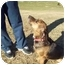 Photo 2 - Beagle/Labrador Retriever Mix Dog for adoption in Buffalo, New York - Lavender: Prison Dog