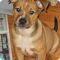 Adopt A Pet :: Mugsy - maryville, TN