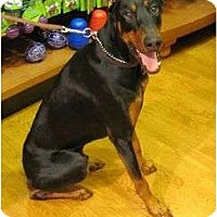 Adopt A Pet :: Jaeger--adopted!! - New Richmond, OH