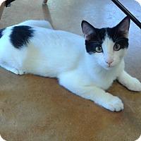 Adopt A Pet :: Markie - Lake Charles, LA