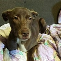 Adopt A Pet :: Silas - Olympia, WA