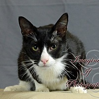 Adopt A Pet :: Sylvester - Crescent, OK