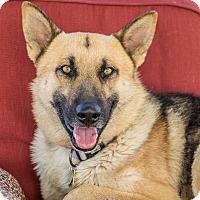 Adopt A Pet :: Dixon - Phoenix, AZ