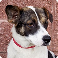 Adopt A Pet :: Temple - Oxford, MS