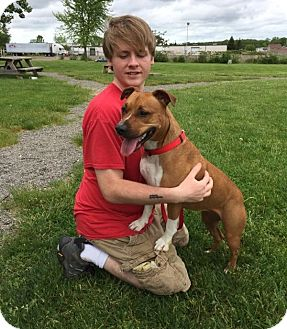 American Pit Bull Terrier Mix Dog for adoption in Elyria, Ohio - Scarlett