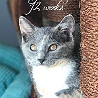 Adopt A Pet :: Avalon - Island Park, NY