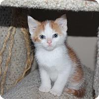 Adopt A Pet :: Egg Nog - Naperville, IL