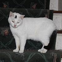 Adopt A Pet :: Patterson - Liverpool, NY