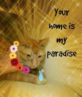 Domestic Shorthair/Domestic Shorthair Mix Cat for adoption in Winfield, Kansas - Garfield