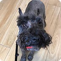 Adopt A Pet :: Linc - Redondo Beach, CA