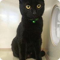 Adopt A Pet :: Jenny - Walnut Creek, CA