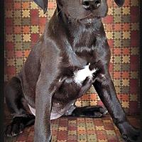 Adopt A Pet :: Tinkerbell - Tijeras, NM