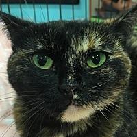 Adopt A Pet :: Meadow - Amelia, OH