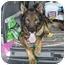 Photo 2 - German Shepherd Dog Mix Dog for adoption in Los Angeles, California - Boris von Lancaster
