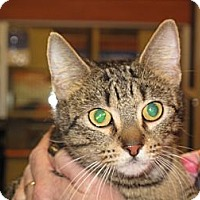Adopt A Pet :: Merci - Port Republic, MD