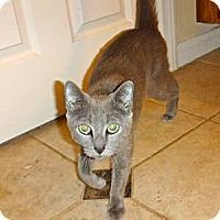 Adopt A Pet :: Cleopatra - Escondido, CA