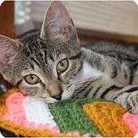 Adopt A Pet :: Pippa (LE) - Little Falls, NJ