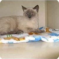 Adopt A Pet :: Shirley - Mesa, AZ