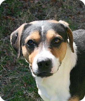 Hound (Unknown Type) Mix Dog for adoption in Lufkin, Texas - Ryan