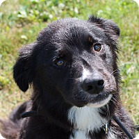 Adopt A Pet :: Ranger - Lebanon, CT