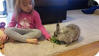Dwarf Mix for adoption in Warren, Michigan - Kyle
