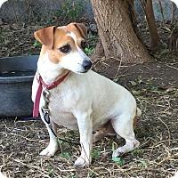 Adopt A Pet :: Crystal in Houston - Houston, TX