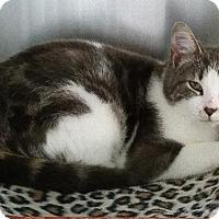 Adopt A Pet :: Mino - Freeport, NY