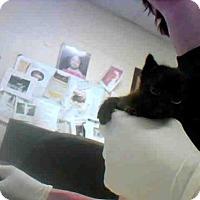 Domestic Mediumhair Cat for adoption in Conroe, Texas - A277132