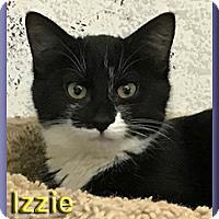 Adopt A Pet :: Izzie - Aldie, VA