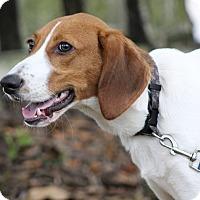 Adopt A Pet :: Lincoln - SOUTHINGTON, CT