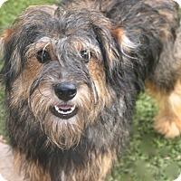 Adopt A Pet :: Sugar - Woonsocket, RI