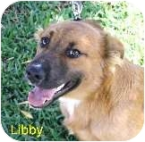 German Shepherd Dog/Border Collie Mix Dog for adoption in Bellflower, California - Libby