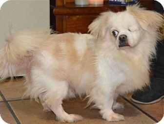 Pekingese Mix Dog for adoption in West LA, California - SNOOPY