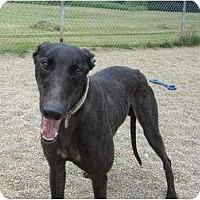 Adopt A Pet :: Skywalker (Black Skywalker) - Chagrin Falls, OH