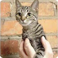 Adopt A Pet :: Whirlie - Chesapeake, VA