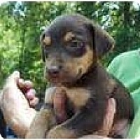 Adopt A Pet :: Josh (pending adoption) - Adamsville, TN