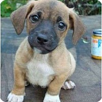 Adopt A Pet :: Bandito - Plainfield, CT