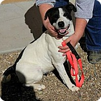Adopt A Pet :: Echo - Cedar City, UT