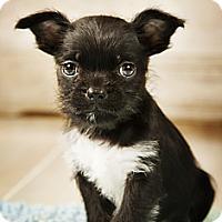 Adopt A Pet :: Mason - Wytheville, VA