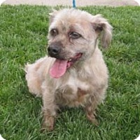 Adopt A Pet :: Mickey - Santa Cruz, CA
