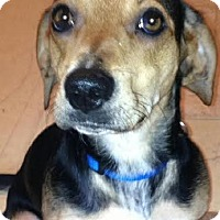 Adopt A Pet :: Addison - Bristol, TN