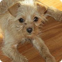 Adopt A Pet :: Betsy - Franklin, VA