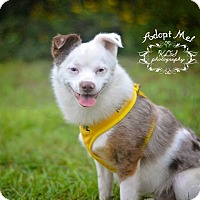Adopt A Pet :: Little Man - Fort Valley, GA