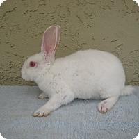 Adopt A Pet :: Curly - Bonita, CA
