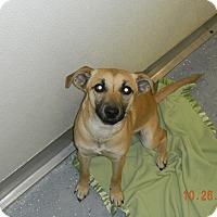 Adopt A Pet :: ANA - Sandusky, OH
