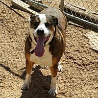 Adopt A Pet :: Raiden Rhett - Maquoketa, IA