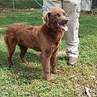 Adopt A Pet :: Hannah - Harrisburg, PA
