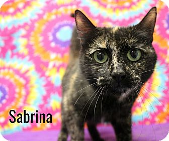 Domestic Shorthair Cat for adoption in Melbourne, Kentucky - Sabrina